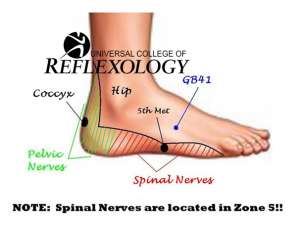 Spine nerves+logo